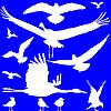 weiße Vögel-Silhouetten