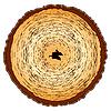 Holz-Querschnitt