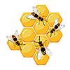 Bienen auf Waben