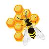Wespe und Waben