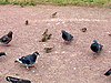 ID 3010940 | Vögel | Foto mit hoher Auflösung | CLIPARTO