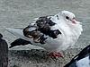 ID 3010941 | Biały gołąb | Foto stockowe wysokiej rozdzielczości | KLIPARTO