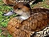 ID 3010974 | Kleine Ente | Foto mit hoher Auflösung | CLIPARTO