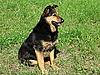 ID 3010990 | Ochrona psa | Foto stockowe wysokiej rozdzielczości | KLIPARTO