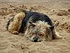 ID 3010991 | Hund am Sandstrand | Foto mit hoher Auflösung | CLIPARTO