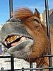 ID 3011003 | Pferd lächelt | Foto mit hoher Auflösung | CLIPARTO
