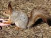 ID 3011023 | Eichhörnchen auf der Hand | Foto mit hoher Auflösung | CLIPARTO