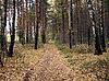 ID 3011909 | Herbstwald | Foto mit hoher Auflösung | CLIPARTO