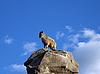 돌에 염소 | Stock Foto