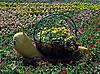 ID 3012007 | Schnecke-Blumenbeet mit Blumen | Foto mit hoher Auflösung | CLIPARTO