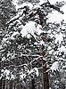 ID 3012042 | Winterwald | Foto mit hoher Auflösung | CLIPARTO