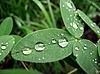 잎에 방울 | Stock Foto