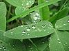 ID 3012340 | 물이 잎에 삭제 | 높은 해상도 사진 | CLIPARTO