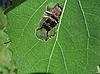 귀여운 딱정벌레 잎의 구멍에 앉아 | Stock Foto