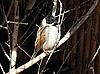 ID 3012478 | 鹀鸟 | 高分辨率照片 | CLIPARTO