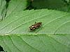 ID 3012504 | Fliege auf Blatt | Foto mit hoher Auflösung | CLIPARTO