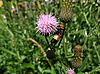 Fliege auf Blume | Stock Foto