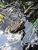 ID 3012509 | Frosch in Teich | Foto mit hoher Auflösung | CLIPARTO
