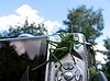 Grüne Heuschrecke vor der Kamera | Stock Foto