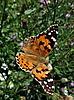 Großer orangefarbener Schmetterling | Stock Foto