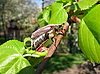 Maybug | 免版税照片