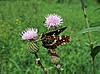 ID 3012548 | Motley motyl na kwiat | Foto stockowe wysokiej rozdzielczości | KLIPARTO