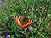 杂色蝴蝶 | 免版税照片