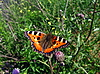 Оранжевая бабочка на цветке | Фото