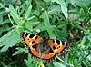Schmetterling auf Gras | Stock Foto