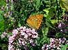 ID 3012595 | Бабочка на сиреневых цветах | Фото большого размера | CLIPARTO