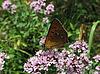 小蝴蝶 | 免版税照片
