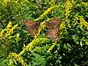Drei Schmetterlinge | Stock Foto