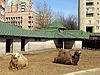 ID 3012620 | Zwei Kamele | Foto mit hoher Auflösung | CLIPARTO