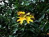 ID 3039627 | Pierwsze żółte jesienne liście | Foto stockowe wysokiej rozdzielczości | KLIPARTO