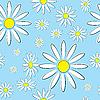 Ilustracja bez szwu z kwiatów stokrotki na niebieskim tle | Stock Vector Graphics