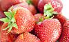 ID 3012745 | 新鲜的草莓 | 高分辨率照片 | CLIPARTO