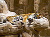 ID 3012759 | Tiger | Фото большого размера | CLIPARTO