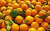 ID 3014035 | Reife Mandarinen mit grüner Mandarine | Foto mit hoher Auflösung | CLIPARTO