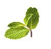 ID 3015852 | Frische grüne Minze | Foto mit hoher Auflösung | CLIPARTO