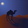 ID 3018588 | Camel w nocy | Stockowa ilustracja wysokiej rozdzielczości | KLIPARTO
