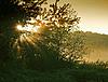ID 3036769 | Wschód słońca w lesie | Foto stockowe wysokiej rozdzielczości | KLIPARTO