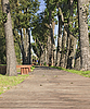 ID 3065392 | Wanderweg im Herbstpark | Foto mit hoher Auflösung | CLIPARTO