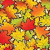 Ahornblätter im Herbst