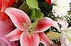 ID 3032828 | Strauß mit rosa Lilie | Foto mit hoher Auflösung | CLIPARTO