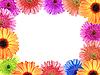 Rahmen mit Blumen | Stock Photo
