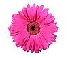 Różowy kwiat | Stock Foto
