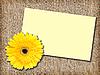 ID 3033037 | Gelbe Blume und leere Visitenkarte | Foto mit hoher Auflösung | CLIPARTO