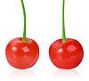 ID 3033049 | Dwie czerwone słodkie-wiśnie | Foto stockowe wysokiej rozdzielczości | KLIPARTO