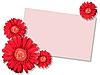 Rote Blume und leere Visitenkarte | Stock Photo