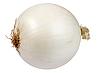 ID 3033145 | White fresh onion | Foto stockowe wysokiej rozdzielczości | KLIPARTO